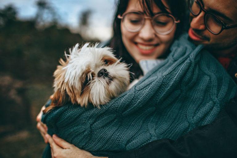 Pies - dieta wątrobowa