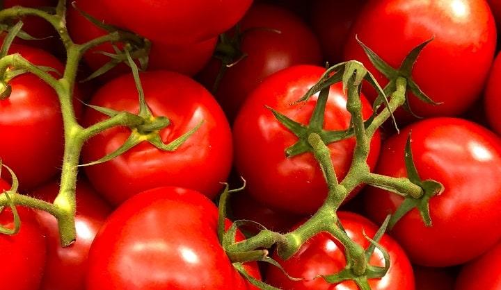Pomidory dla psów