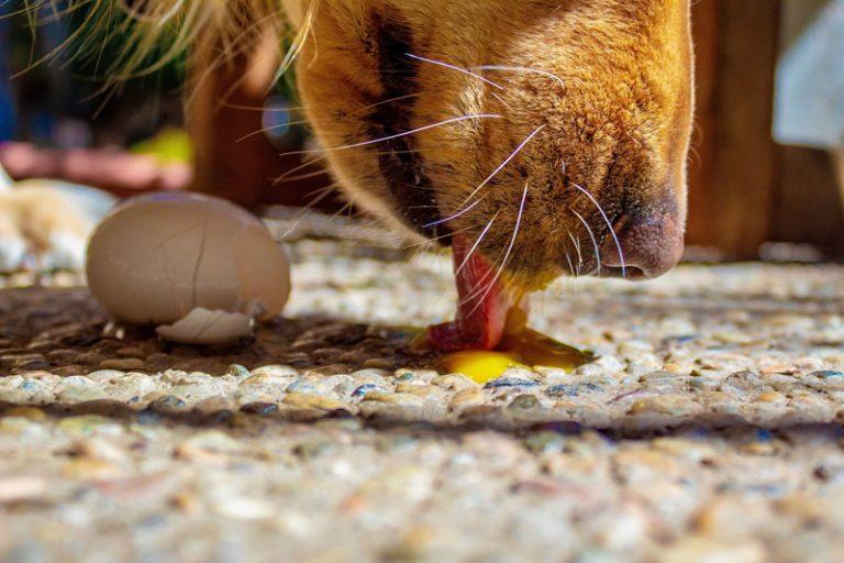 Jajka dla psa