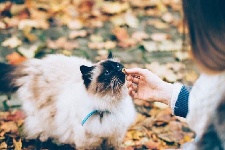 żywienie kotów